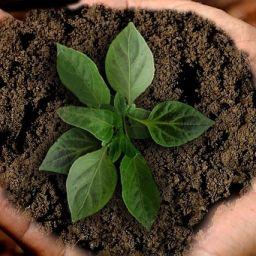 Sostenibilidad, Sustentabilidad, Responsabilidad Social, ¿son la misma cosa?