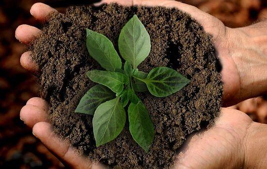 Diferencias entre Sustentabilidad, Sostenibilidad